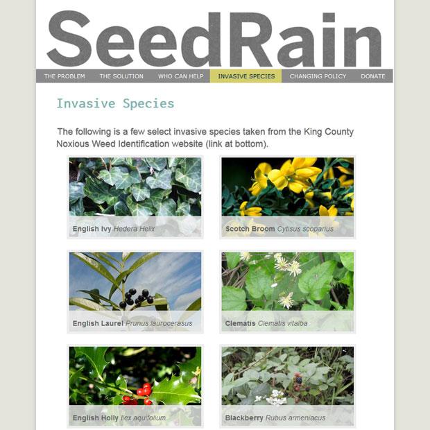 Seed Rain